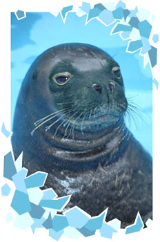 A seal