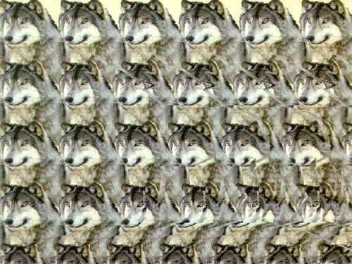 wolfstereo - Show Posts - Macky Ferniz