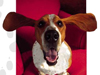 Doggone Fun  -- Free Animated Objects, Screensavers from American Greetings