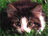 Meow  -- Free Cute Animated Animal, Screensavers from American Greetings