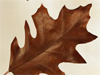 Leaf Clean-Up  -- Free Traditional Just Because Animated, Screensavers from American Greetings