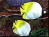 Tropical Reef  -- Free Traditional Animal, Screensavers from American Greetings