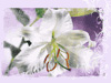 Easter Blooms  -- Free Christian March, Screensavers from American Greetings