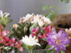 Flowery Show  -- Free Celebrate the Season Anyone, Screensavers from American Greetings