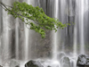 Tropical Waterfalls  -- Free Traditional Animated Nature, Screensavers from American Greetings