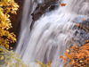 Portraits of Autumn  -- Free Nature, Screensavers from American Greetings