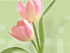 In Any Language  -- Free Celebrate Spring, Screensavers from American Greetings