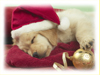 A Long Winter's Nap  -- Free Cute Pets Holiday, Screensavers from American Greetings