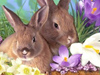 Everything Easter  -- Free Cute Animal, Screensavers from American Greetings