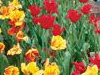 Messengers of Spring  -- Free Nature, Screensavers from American Greetings