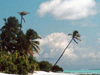 Scenes from Paradise  -- Free Beach, Nature Screensavers from American Greetings