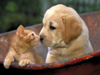 Puppies and Kittens  -- Free Pets Animal, Screensavers from American Greetings