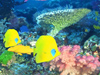 Coral Reef  -- Free Traditional Aquarium, Screensavers from American Greetings