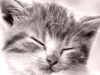 Extra Cozy Places  -- Free Pets, Animal Screensavers from American Greetings
