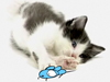 Cat and Mouse  -- Free Cute Pets Animal, Screensavers from American Greetings