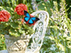 Butterfly Gardens  -- Free Just Because, Screensavers from American Greetings