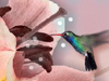 A Hummingbird Moment  -- Free Trendy Nature, Screensavers from American Greetings