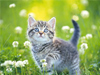 All Kittens  -- Free Cute Nature, Screensavers from American Greetings