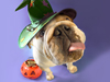 Halloween Pet Parade  -- Free Dogs October, Pets October Screensavers from American Greetings