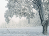 Snowbound  -- Free Just Because, Screensavers from American Greetings