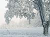 Snowbound  -- Free Celebrate the Season, Screensavers from American Greetings