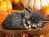 Kittens in Autumn  -- Free Pets Celebrate Fall, Screensavers from American Greetings