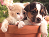 Buddies  -- Free Pets Static, Desktop Wallpapers from American Greetings