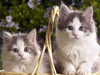 Basket of Kittens  -- Free Cute Pets Static Animal, Desktop Wallpapers from American Greetings