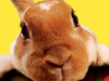 Easter Bunny  -- Free Cute Static Animal, Desktop Wallpapers from American Greetings
