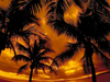 Tropical Dream  -- Free Beach, Nature Desktop Wallpapers from American Greetings