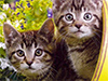 Summer Kittens  -- Free Pets Static, Desktop Wallpapers from American Greetings