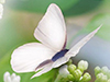 Butterflies and Flowers  -- Free Just Because Static, Desktop Wallpapers from American Greetings