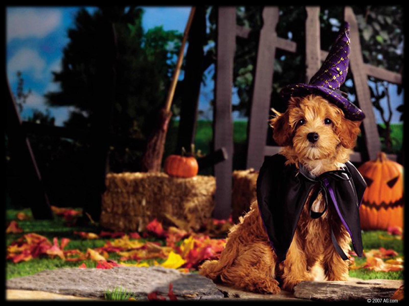 Download Wallpaper Halloween Puppy - 3063761_1600x1200  Snapshot_217844.jpg
