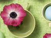 Easter Eggs  -- Free Static Flower,Static  Nature Desktop Wallpapers from American Greetings