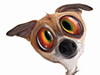 All Screwed Up!  -- Free Dogs Static, Pets Static Desktop Wallpapers from American Greetings