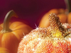 Autumn Magic  -- Free Traditional Celebrate Fall, Desktop Wallpapers from American Greetings