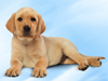 June Calendar  -- Free Dogs, Pets Desktop Wallpapers from American Greetings