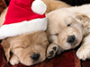 Christmas Puppies  -- Free Christmas, Holiday Desktop Wallpapers from American Greetings