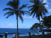 Alone in Paradise  -- Free Beach, Nature Desktop Wallpapers from American Greetings