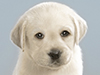 Pack of Pups  -- Free Cute Dogs,Cute  Pets Desktop Wallpapers from American Greetings