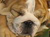 Puppy Dreams  -- Free Dogs, Pets Desktop Wallpapers from American Greetings