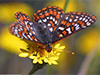 Graceful Landing  -- Free Traditional Animal, Desktop Wallpapers from American Greetings