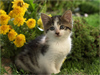 Yard Kitty  -- Free Cute Pets Flower,Cute Pets  Nature Desktop Wallpapers from American Greetings