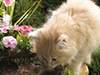 Thirsty Kitten  -- Free Pets Nature, Desktop Wallpapers from American Greetings