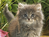Garden Explorer  -- Free Cute Pets Animal, Desktop Wallpapers from American Greetings