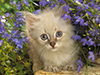 Kitten in Bloom  -- Free Pets Nature, Desktop Wallpapers from American Greetings
