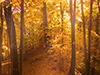 The Spirit of Autumn  -- Free Just Because Anyone Nature, Desktop Wallpapers from American Greetings