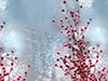 Winter Berries  -- Free Just Because, Desktop Wallpapers from American Greetings