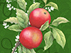 Holiday Fruit  -- Free Nature Christmas,Nature  Holiday Desktop Wallpapers from American Greetings