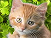 Kitten and Shamrocks  -- Free Cute Animal, Desktop Wallpapers from American Greetings